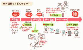 体外受精.jpg